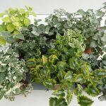 Strukturpflanzen